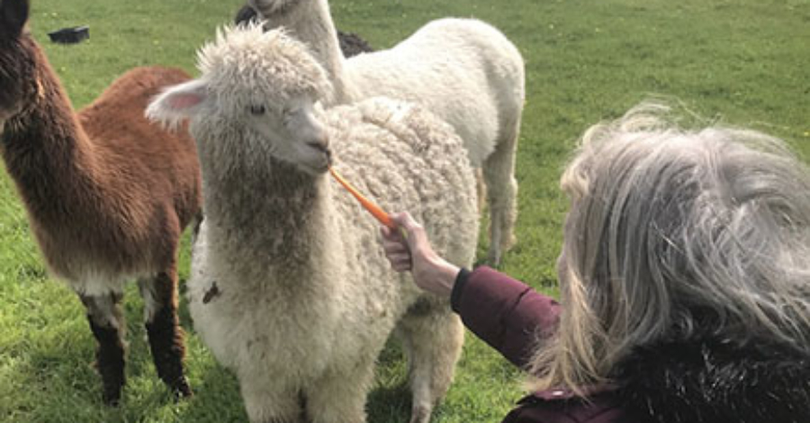 RAINBOW DAY CARE COMING TO CARLSHEAD FARM, SICKLINGHALL